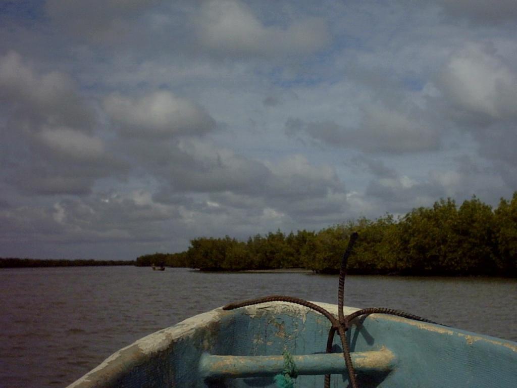 2006_08_13 - 05 - Isla de los pájaros - Casamance - (Senegal)
