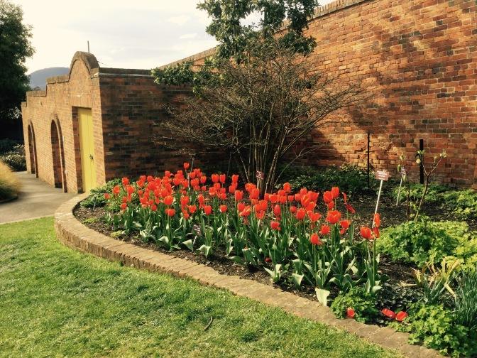 Visita al jardín botánico de Hobart