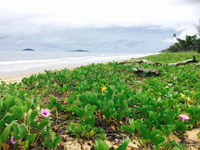 Día 5 : Ruta de Mission Beach a Townsville, Australia