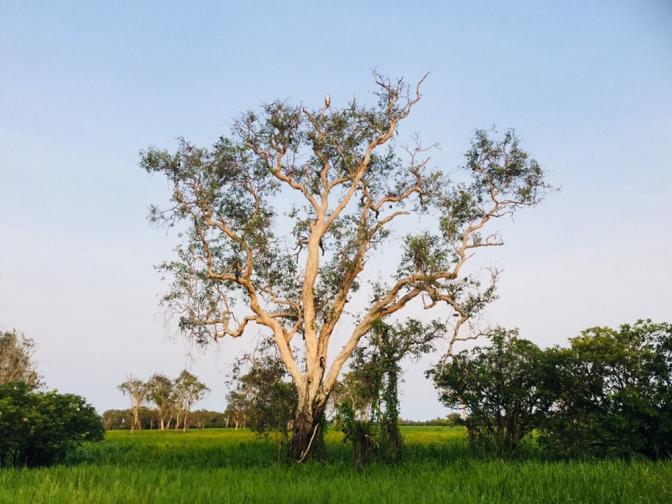 Ruta de una semana por Darwin y alrededores, Australia